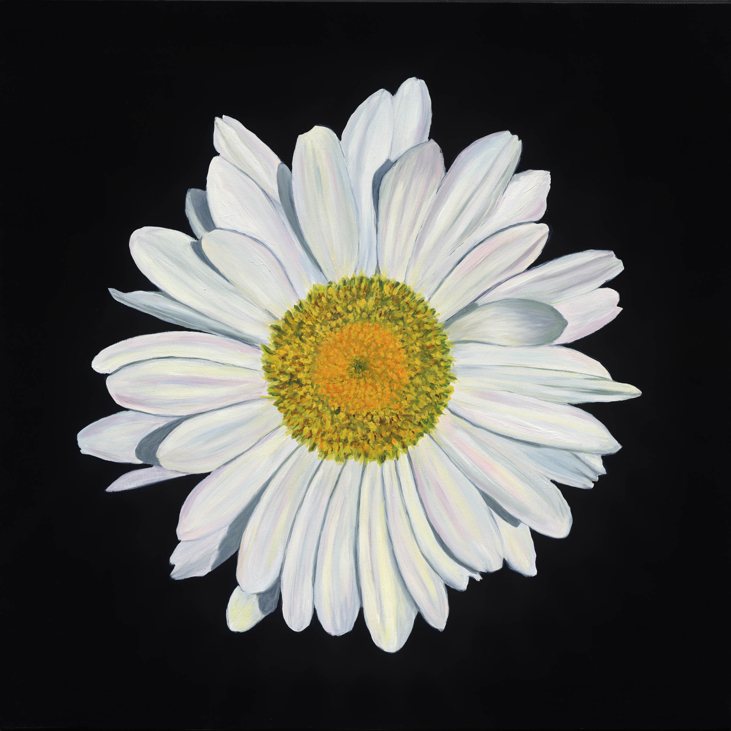 Daisy drawing tumblr at getdrawings free for personal use 2400x2400 portrait of a white shasta daisy art of giving izmirmasajfo