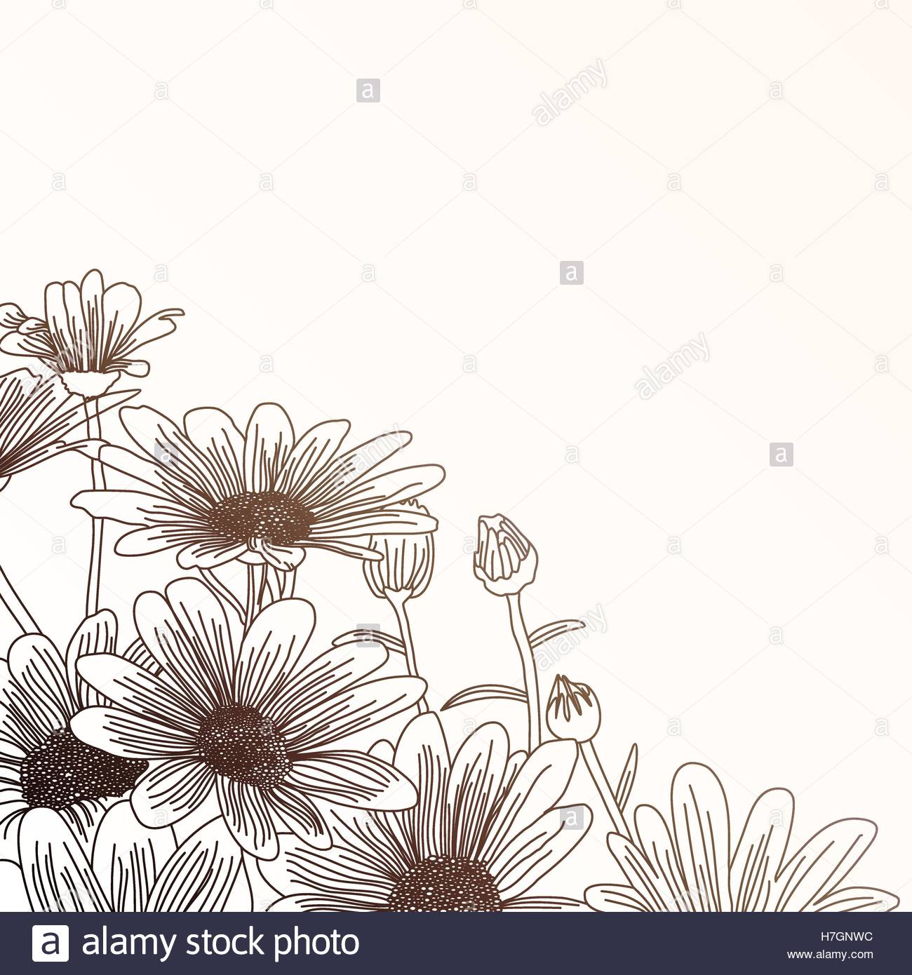 1300x1390 Daisy Flowers On A Beige Background, Outline Drawing. Vector
