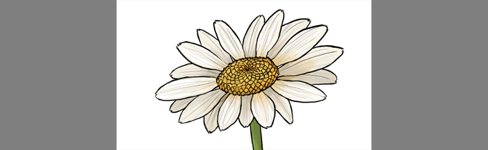 700x216 How To Draw Flowers The Innocent And Cheerful Daisy