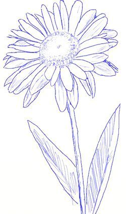 250x424 How To Draw A Daisy, Step 4 Tattoos Drawing
