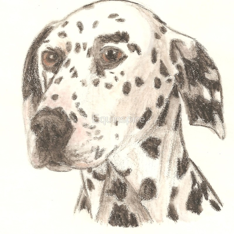 800x800 Dalmatian Drawing Spiral Notebooks By Equinspire Redbubble