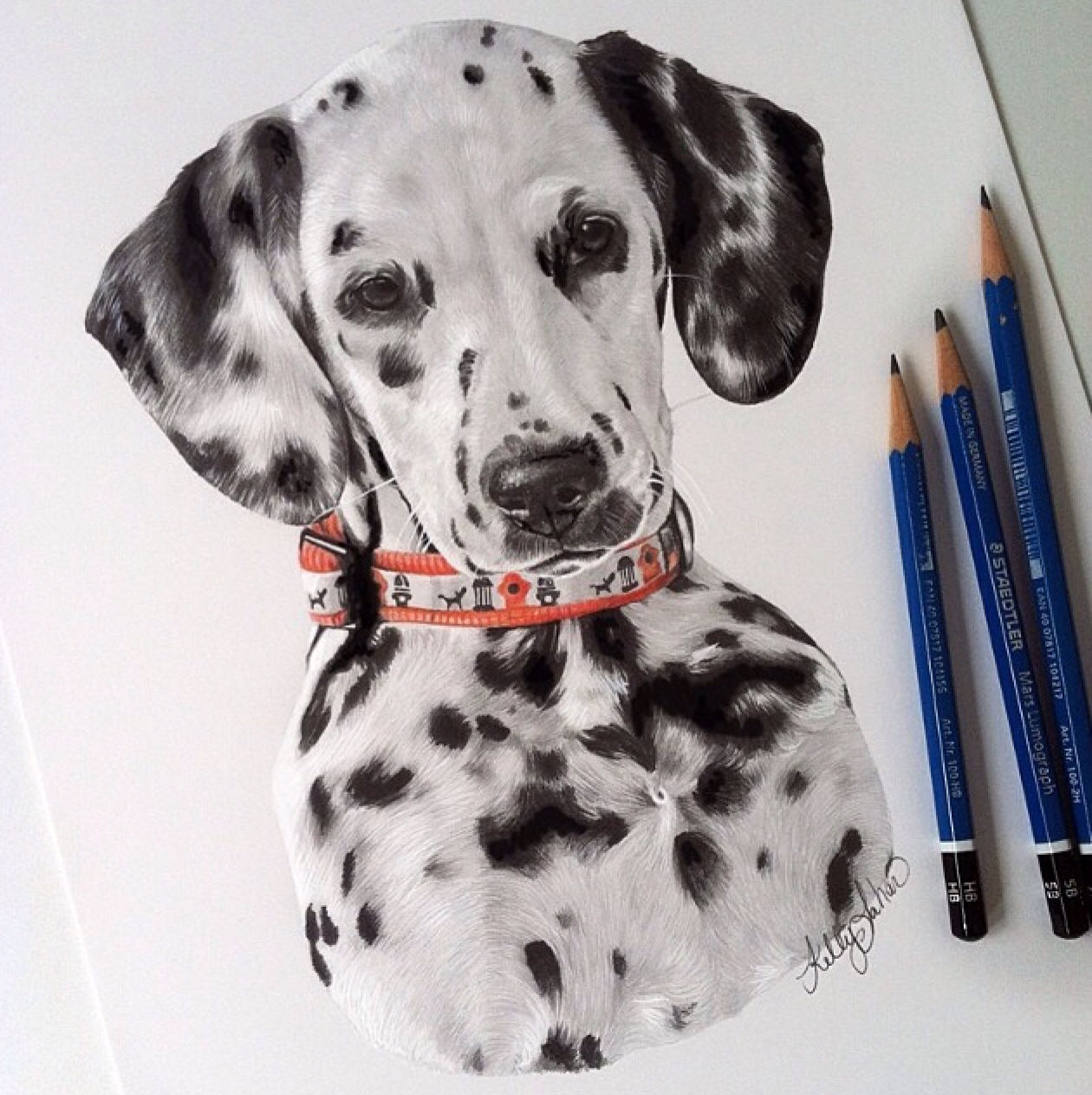 1260x1263 Kelly Lahar, Amazing Dalmatian Drawing Mind Blowing Colored