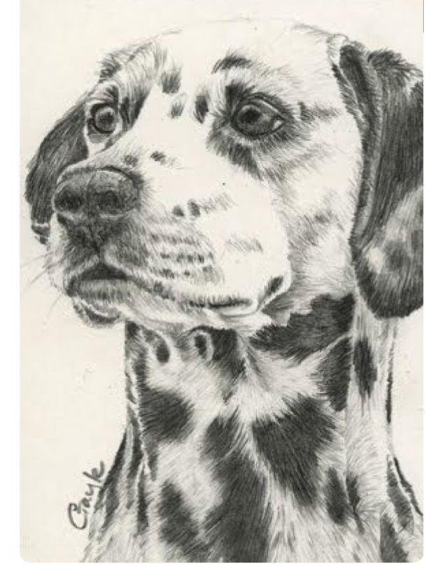 623x816 Pin By Doggie Haven On Puppies! Dalmatian, Drawings