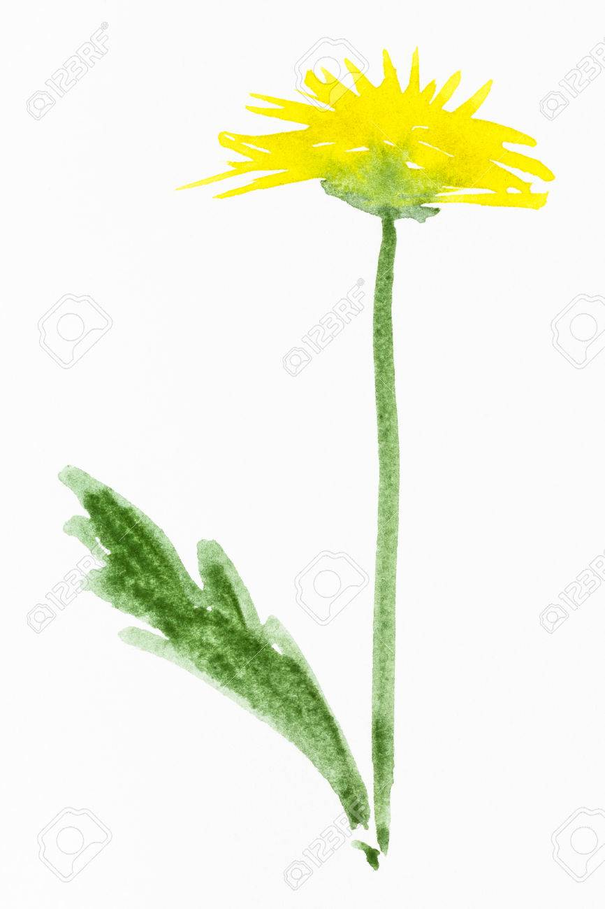 dandelion flower drawing at getdrawings   free for personal use