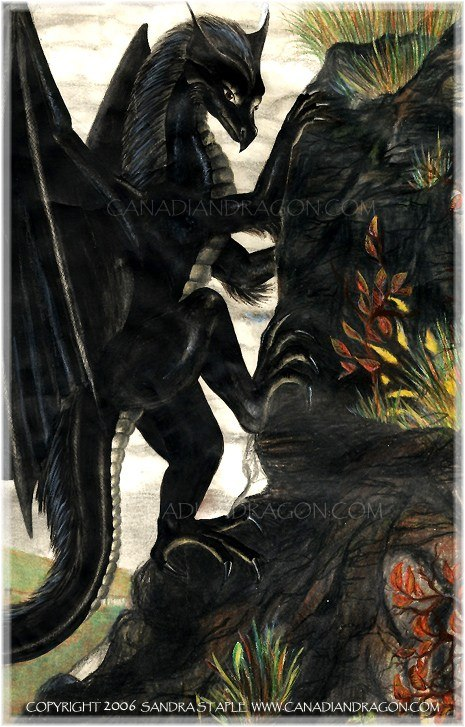 465x727 Canadian Dragon Fantasy Art Original Black Female Dragon Drawing