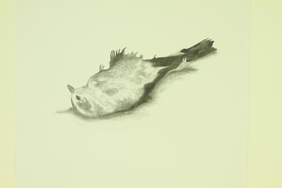 900x600 Am A Dead Bird Drawing By Oren Markovitz