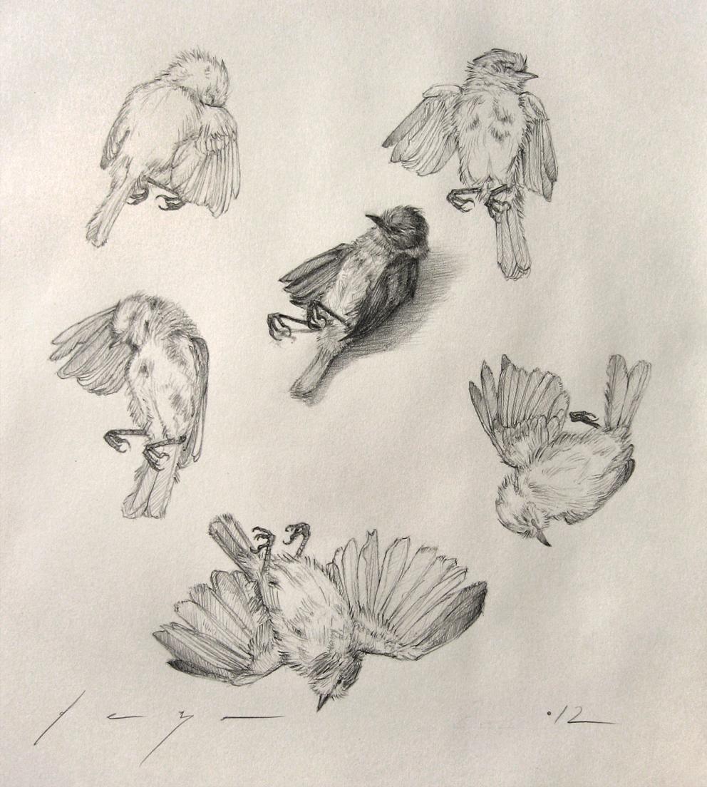 992x1104 Eduardo Deza Six Studies Of A Dead Bird