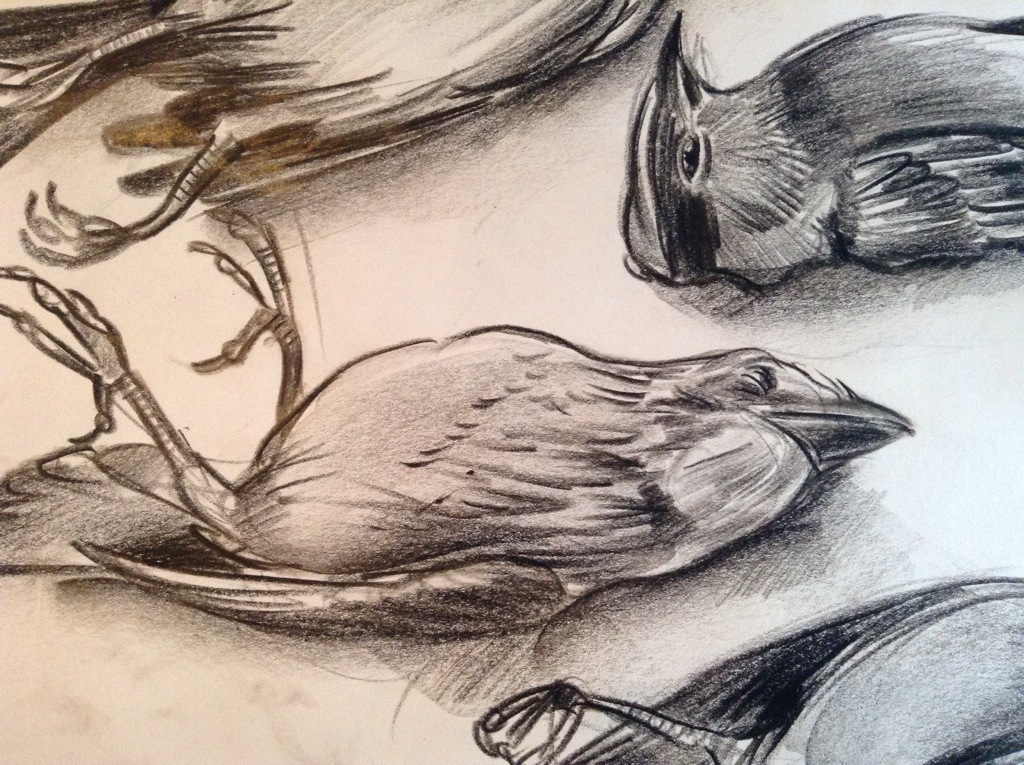 1024x765 Special Sale Dead Bird Collection Embroidered Drawings