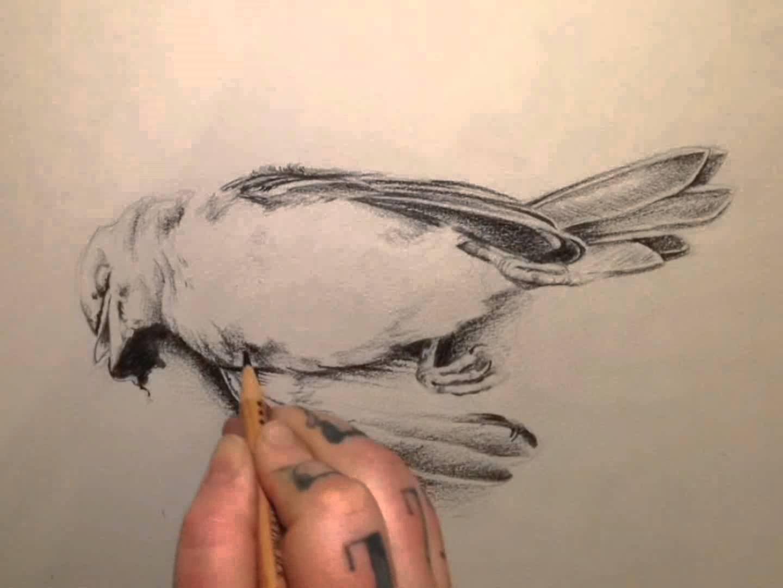 1440x1080 Dead Bird