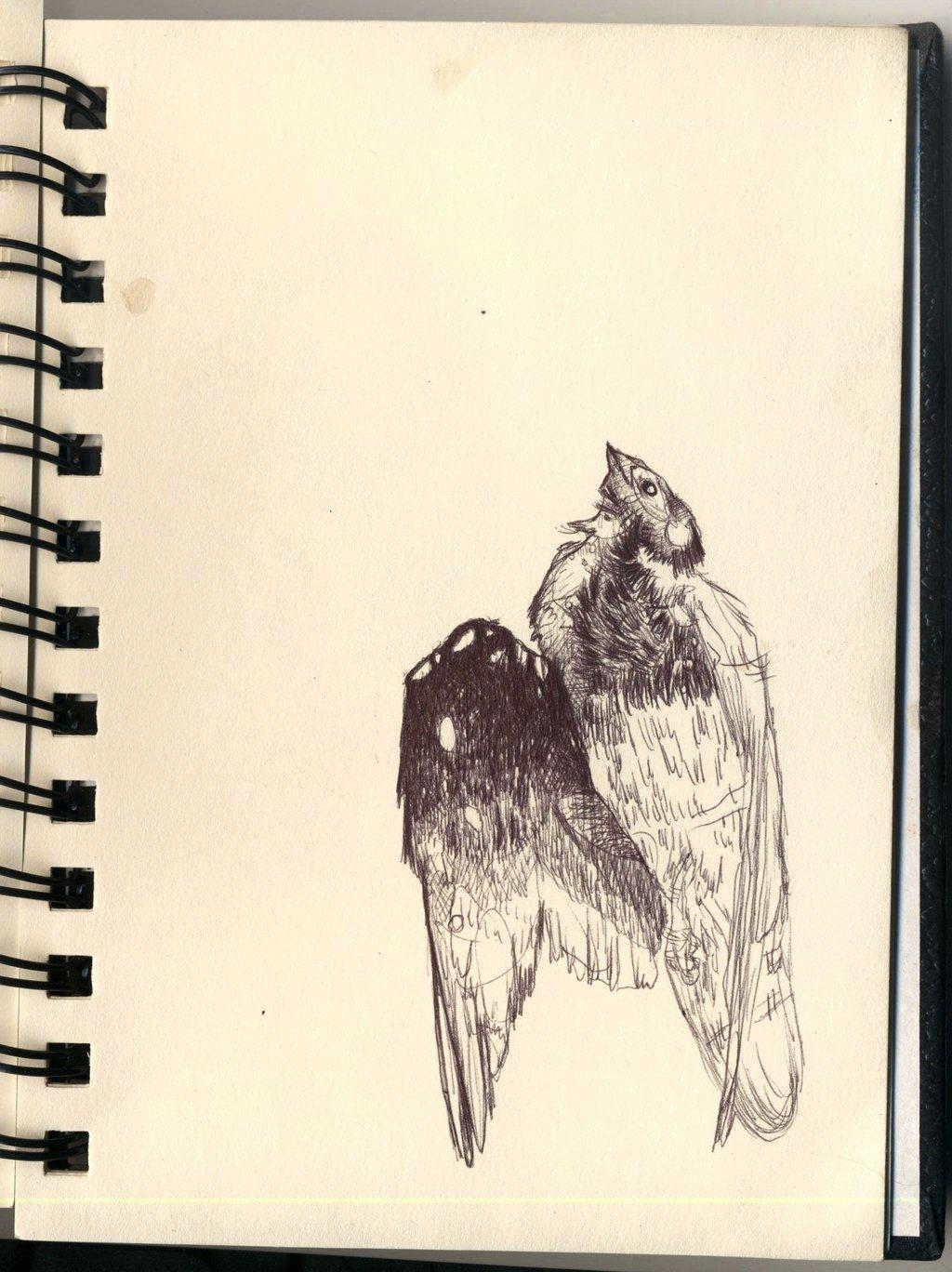 1024x1368 Dead Bird By Pttrdy