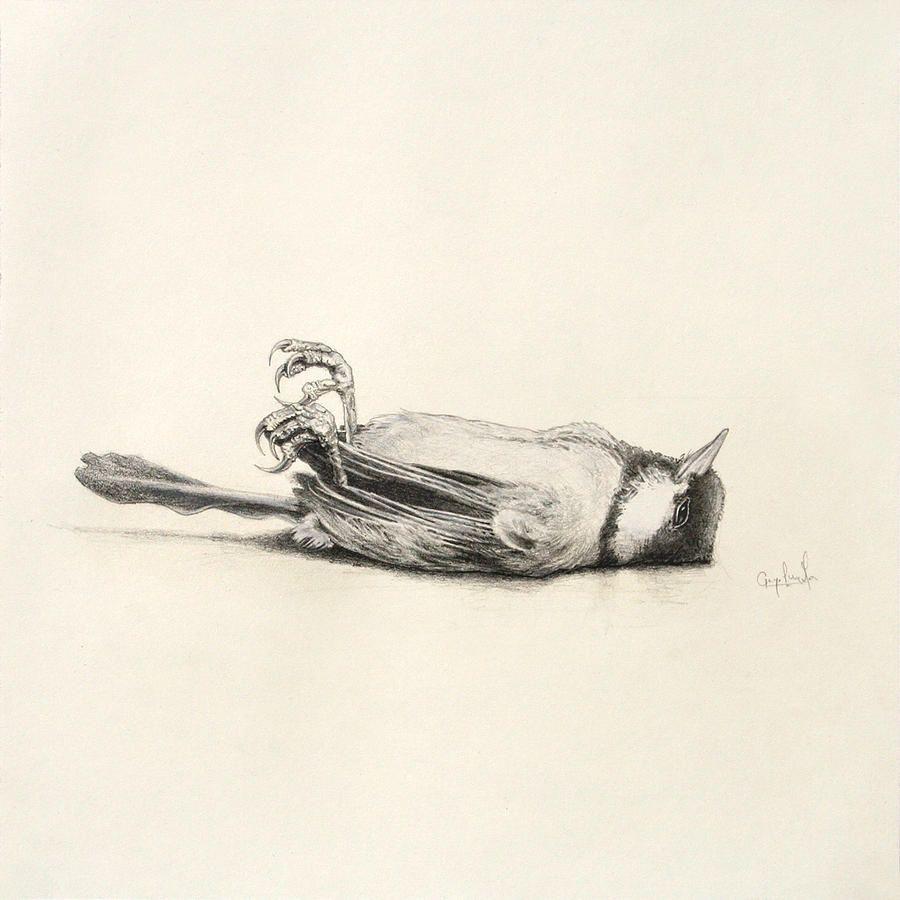 900x900 Dead Bird Sketch Drawing Dcfgb