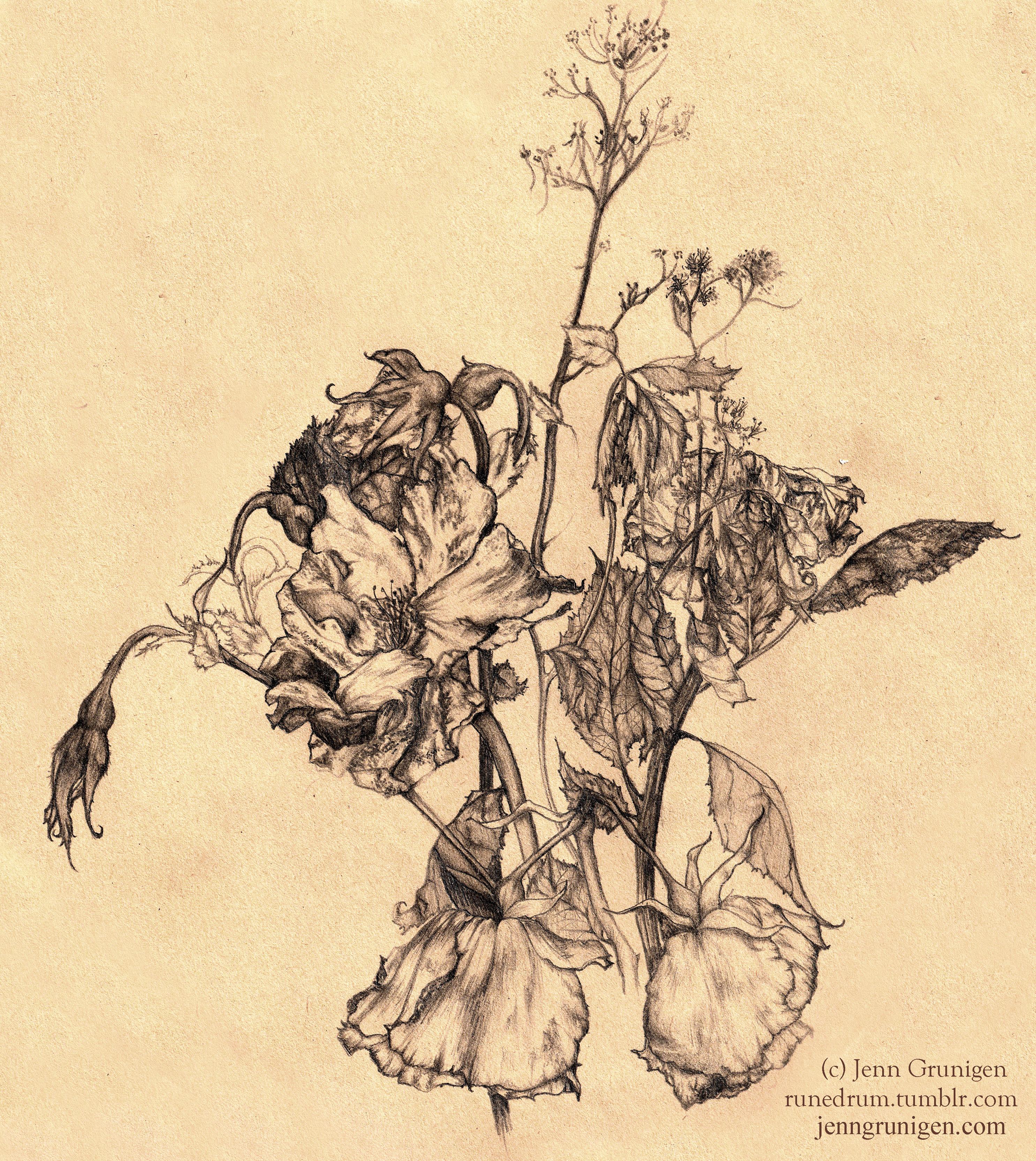 2970x3330 Dead Flower Drawing