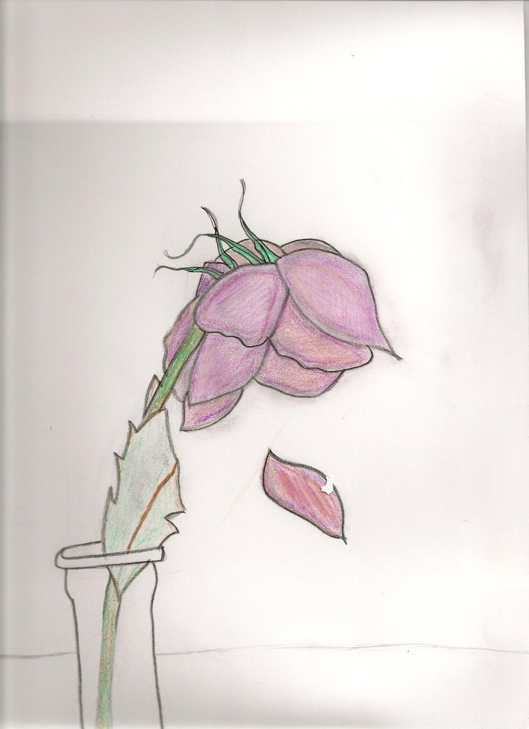 Dead flower drawing at getdrawings free for personal use dead 762x1049 dead flower by emogirl9257 on deviantart izmirmasajfo