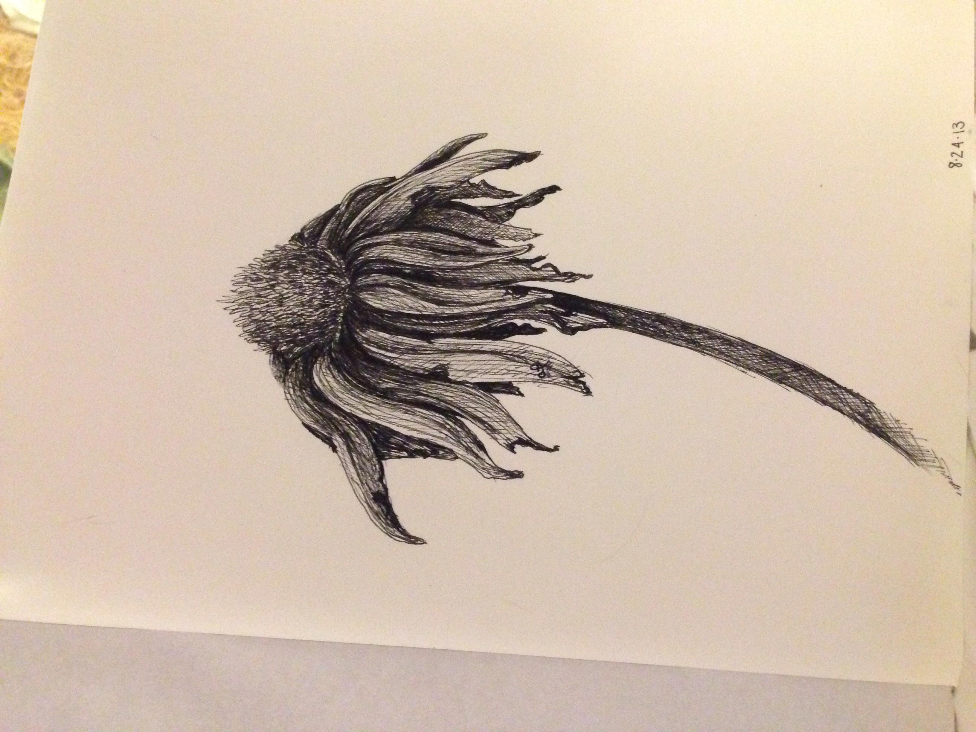3264x2448 Wilting Flower Drawn By Alexis Fazio (Skls Portraits