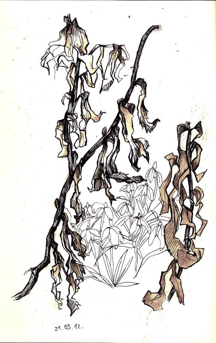 710x1126 Dead Flowers And Snowdrops 1 By Juliaschlosser