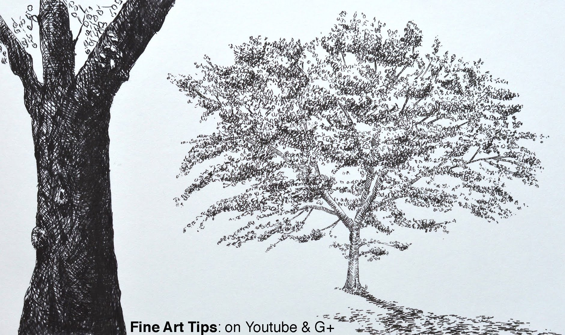1881x1116 Oak Tree Sketches Drawn Dead Tree Oak Tree Bark