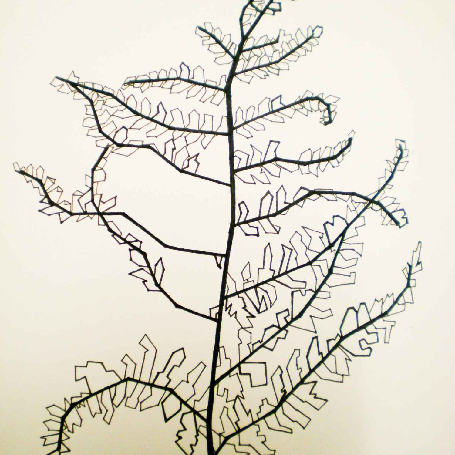 1500x1500 Dead Plant Drawing Ink Drawing Of Dead Fern, Dead Plant Clip Art