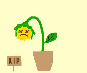 300x250 Dead Plant