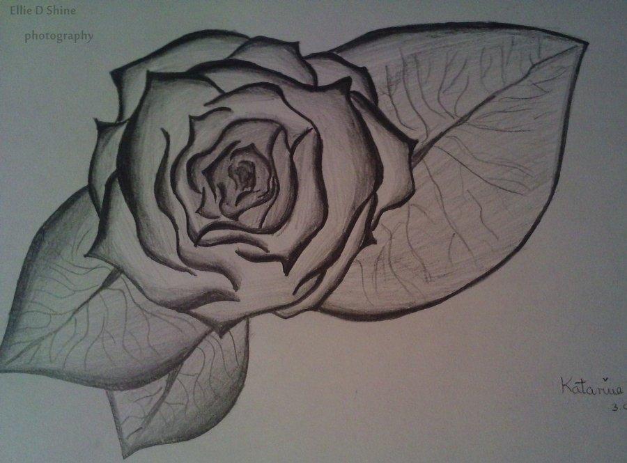 900x665 Dead Rose By Ellie D Shine