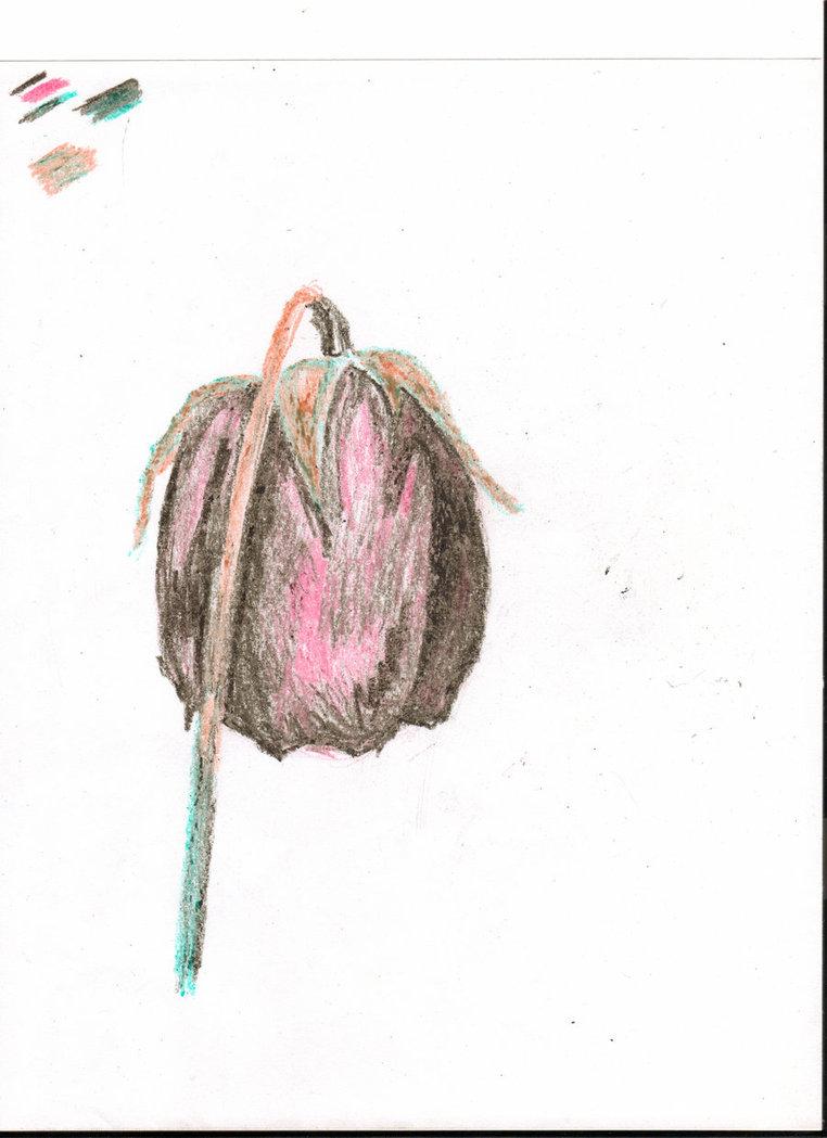 762x1049 Crayon Dead Rose By Jadisofeternity