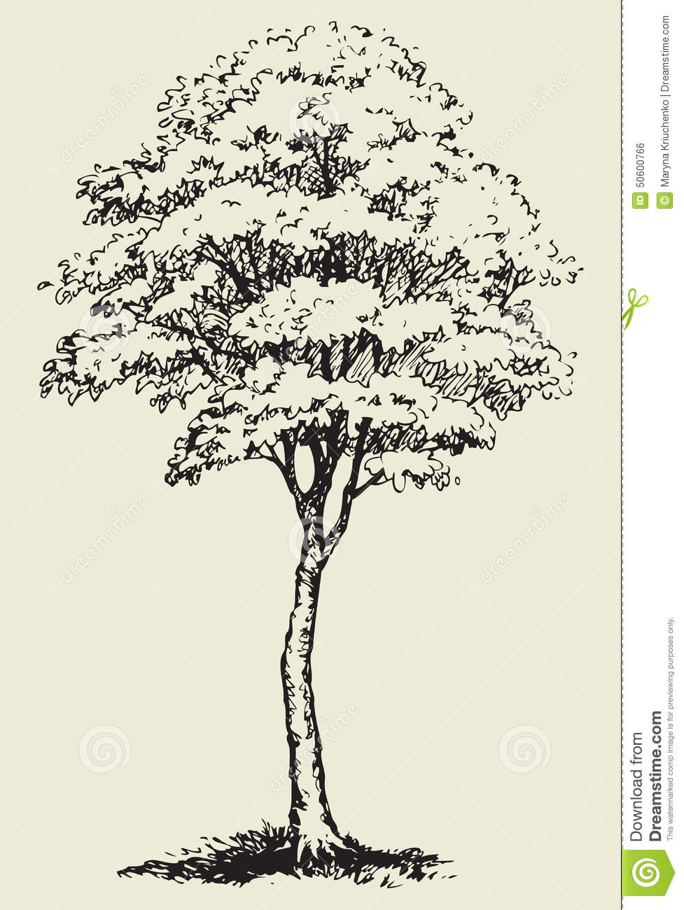 977x1300 Big Tree.vector Sketch Stock Vector