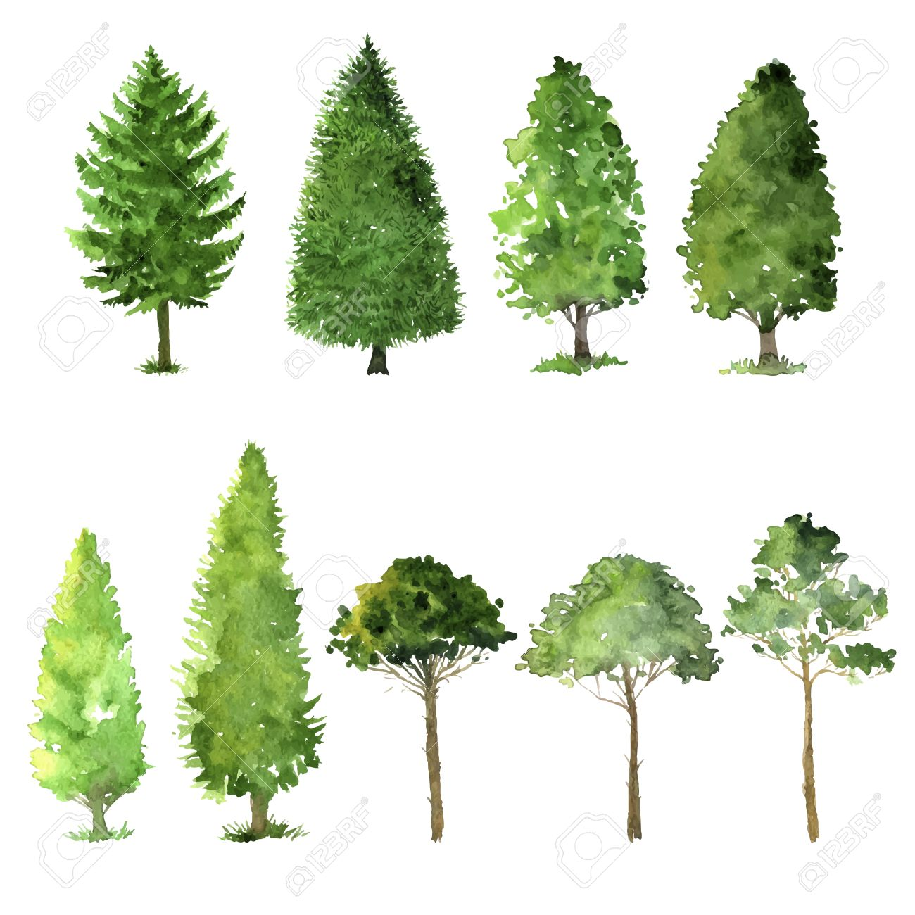1300x1300 Set Of Trees Drawing By Watercolor, Conifers And Deciduous, Green