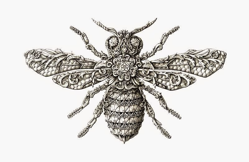 800x520 Decorative Insect Drawing By Alex Konahin ~ Art Craft Gift Ideas