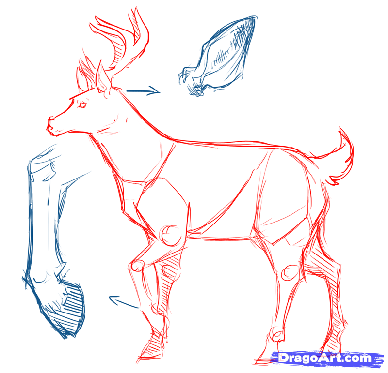 800x771 How To Draw Deer, Drawing Deer, Step By Step, Forest Animals