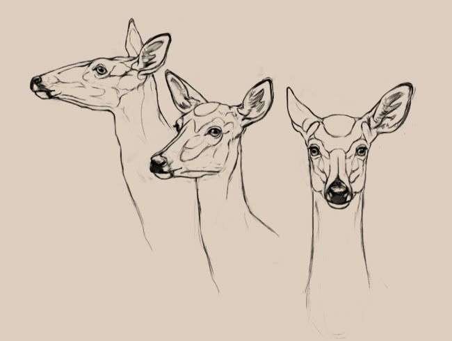 650x491 Let's Draw Deer The Endless Forest Anatomy Great Amp Small