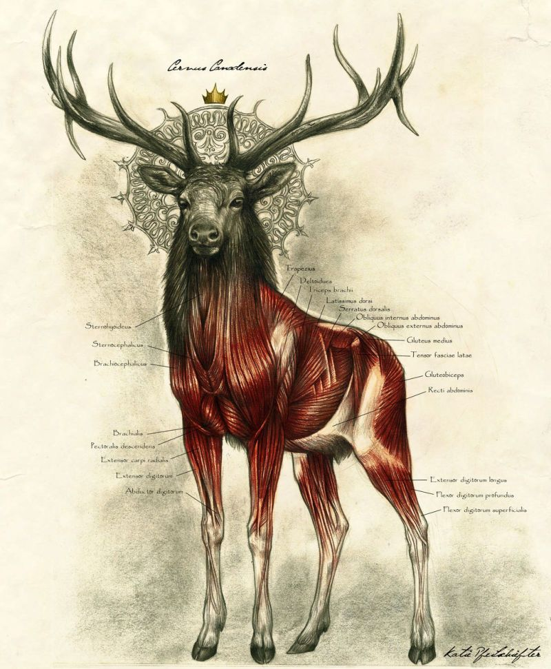 800x971 One Of The Most Majestic Anatomy Illustrations We'Ve Ever Seen
