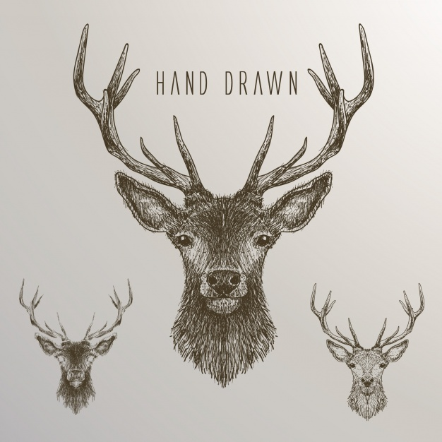 626x626 Hand Drawn Deer Collection Vector Free Download