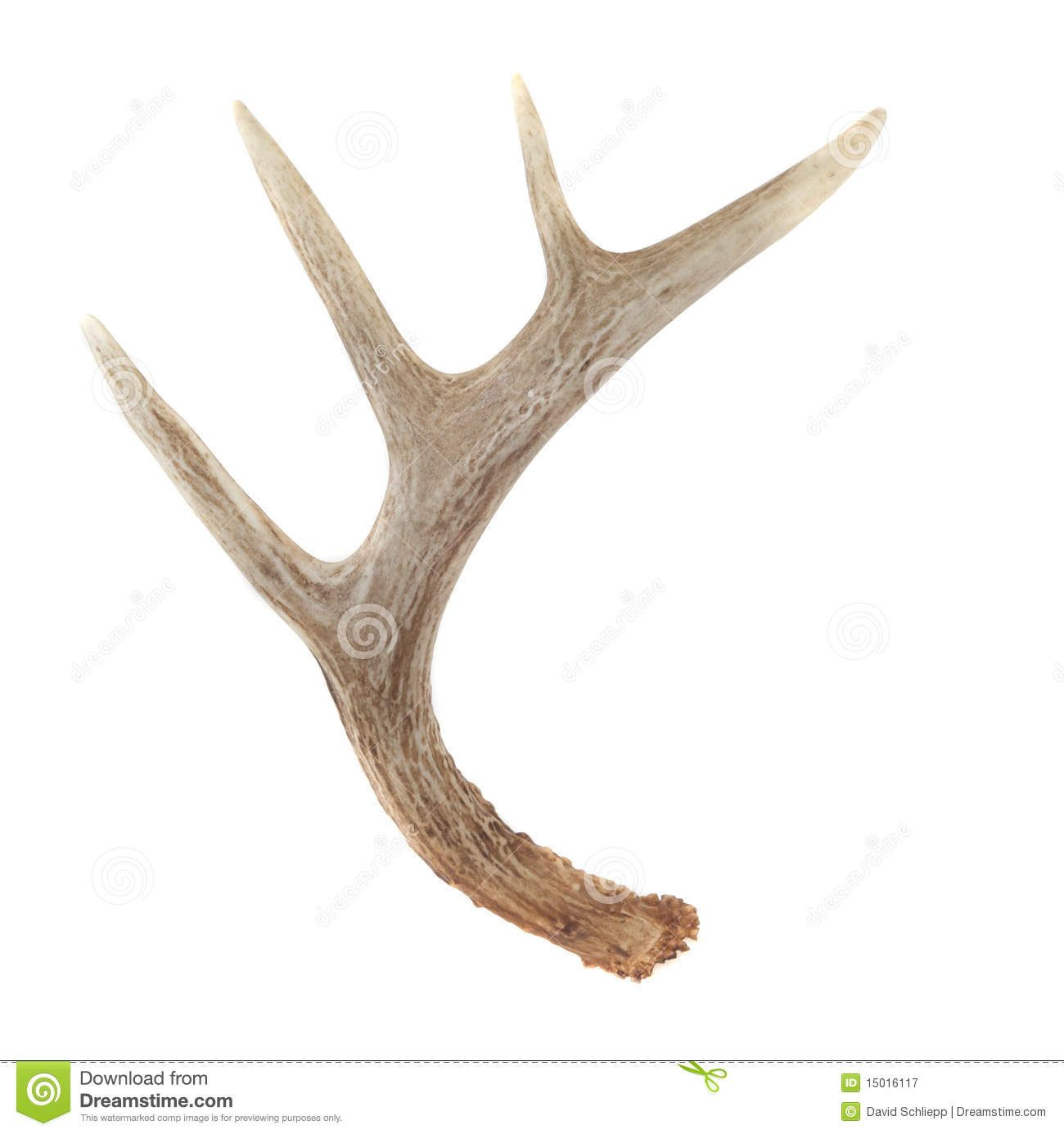 1300x1385 Pix Gt Whitetail Deer Antlers Drawing Inspiration