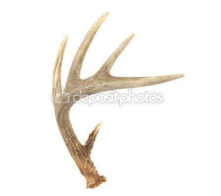 449x399 Deer Antler Sketch