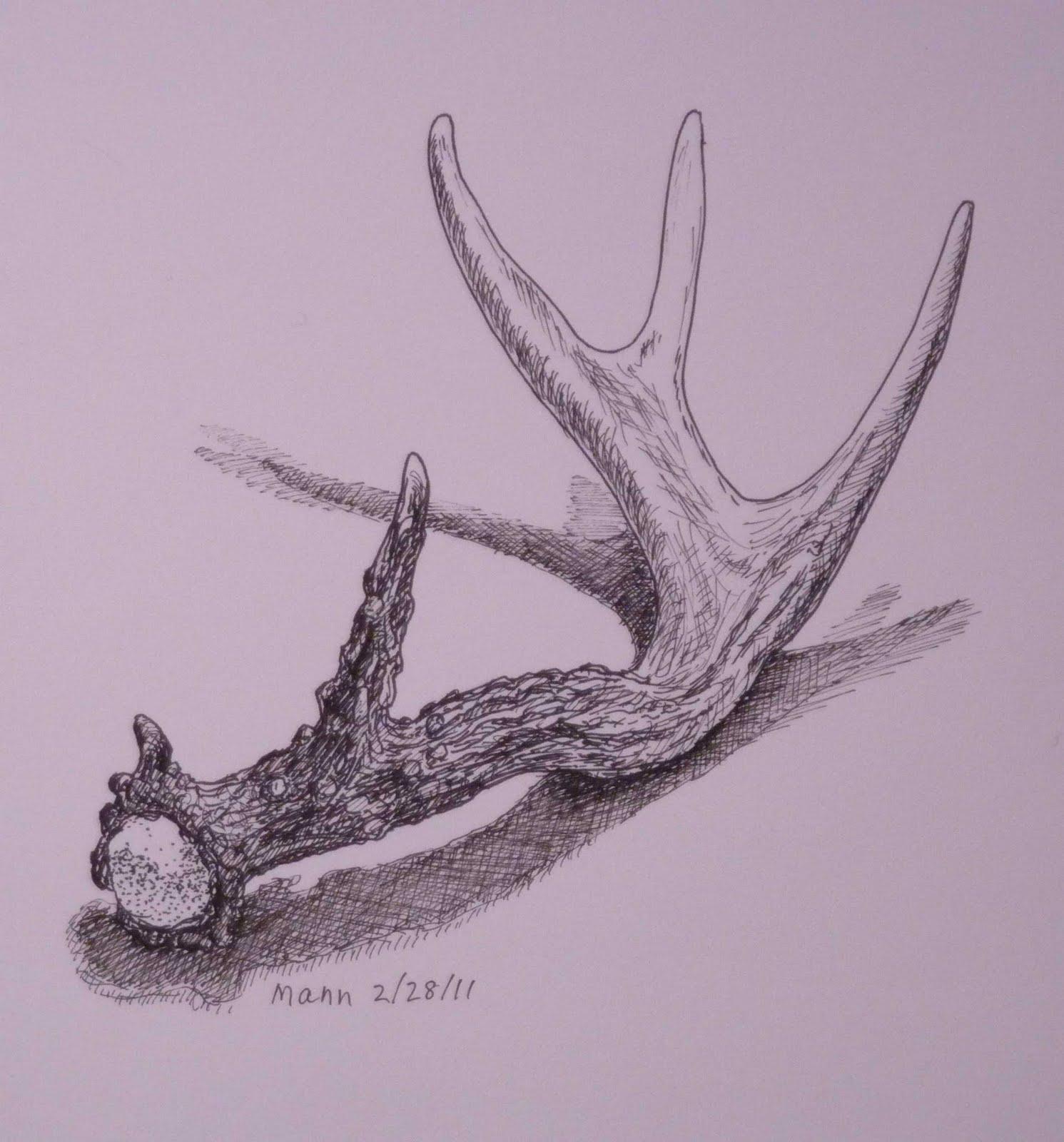 1491x1600 Pencil Contour Line Drawing Of A Deer Antler