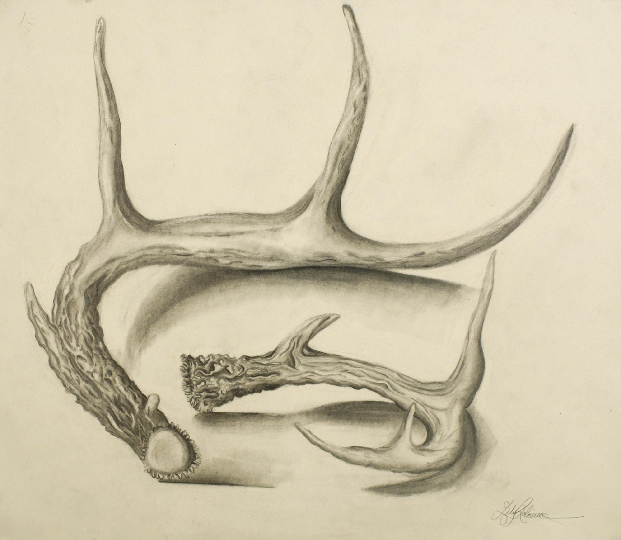 2617x2274 Deer Antler Drawing Drawing Deer Drawings