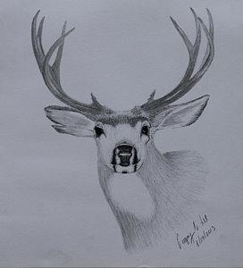 272x300 Deer Antler Drawings