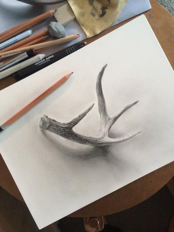 570x760 Deer Antler Graphite Drawing Giclee Print