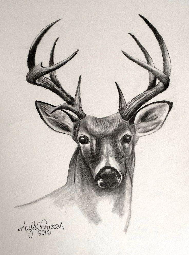 736x996 Pictures Pencil Drawings Of Deer Antlers,