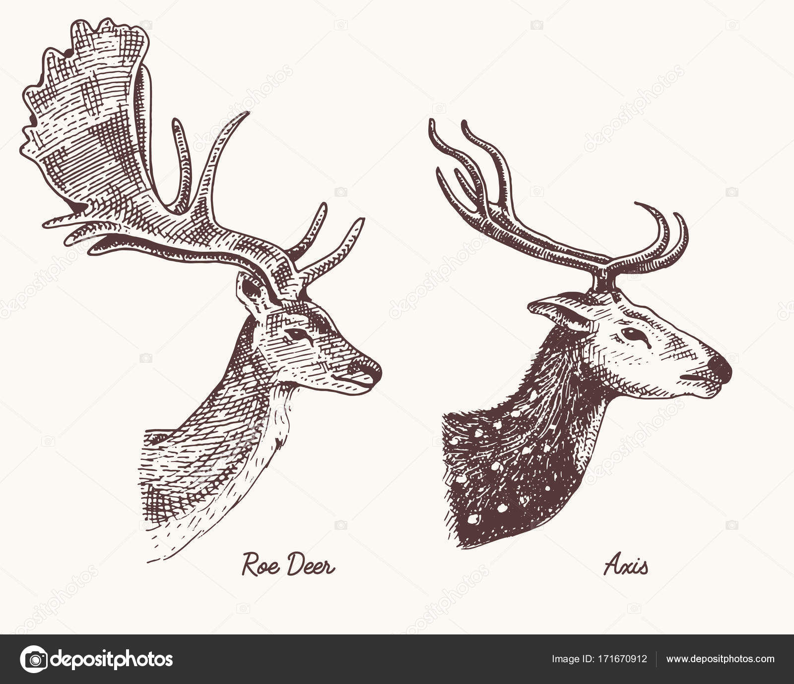 1600x1380 Roe Deer Or Doe, Axis Or Indian Dotted Vector Hand Drawn