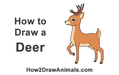 500x315 How To Draw A Deer (Cartoon)