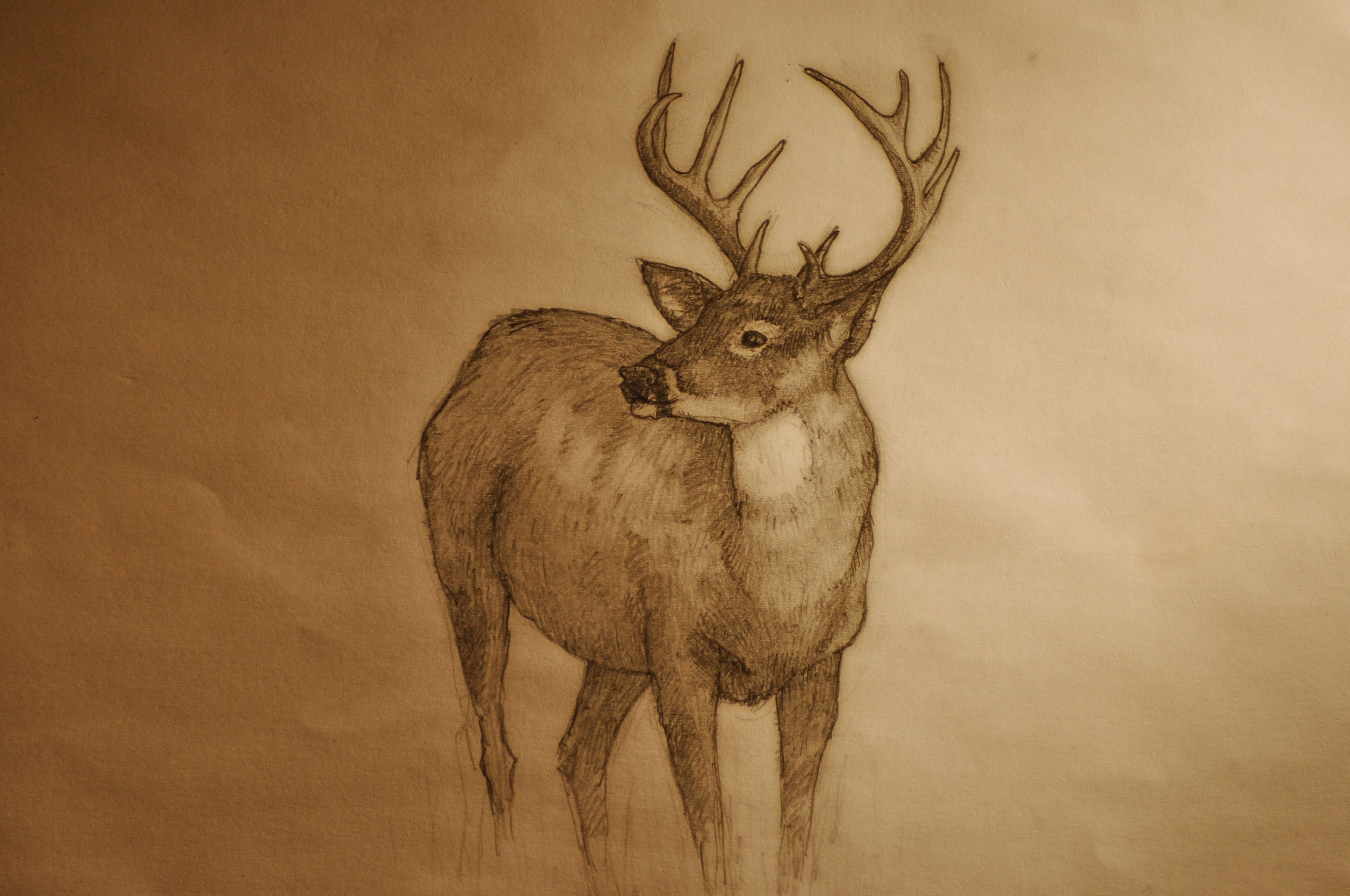 Line Drawings Of Animals Deer : Deer drawing at getdrawings.com free for personal use