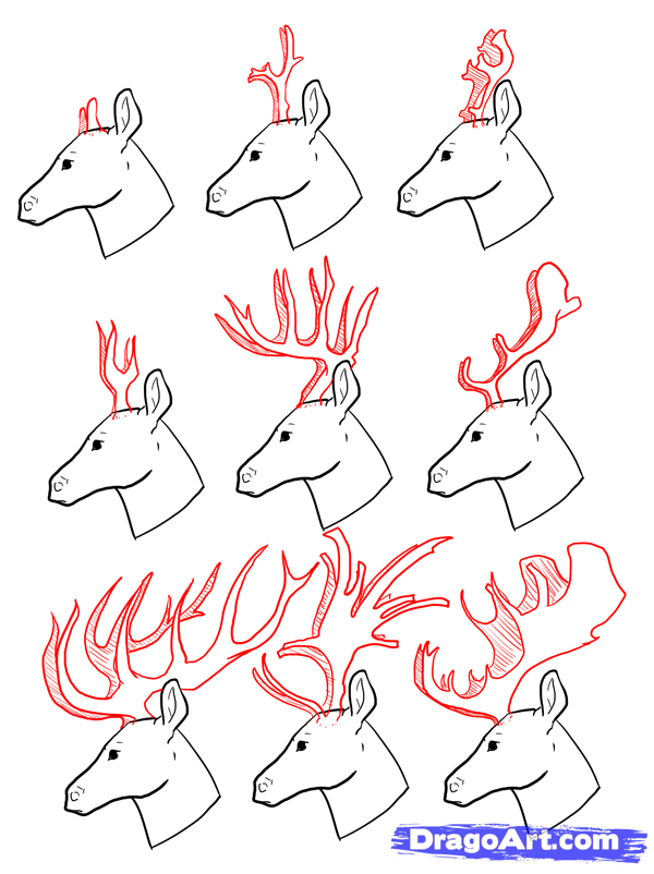 Deer Drawing Easy At Getdrawings Com Free For Personal Use Deer