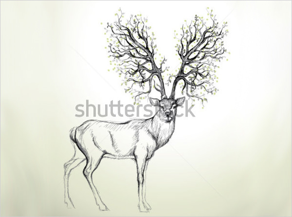 600x446 Free Deer Drawings Amp Designs Free Amp Premium Templates