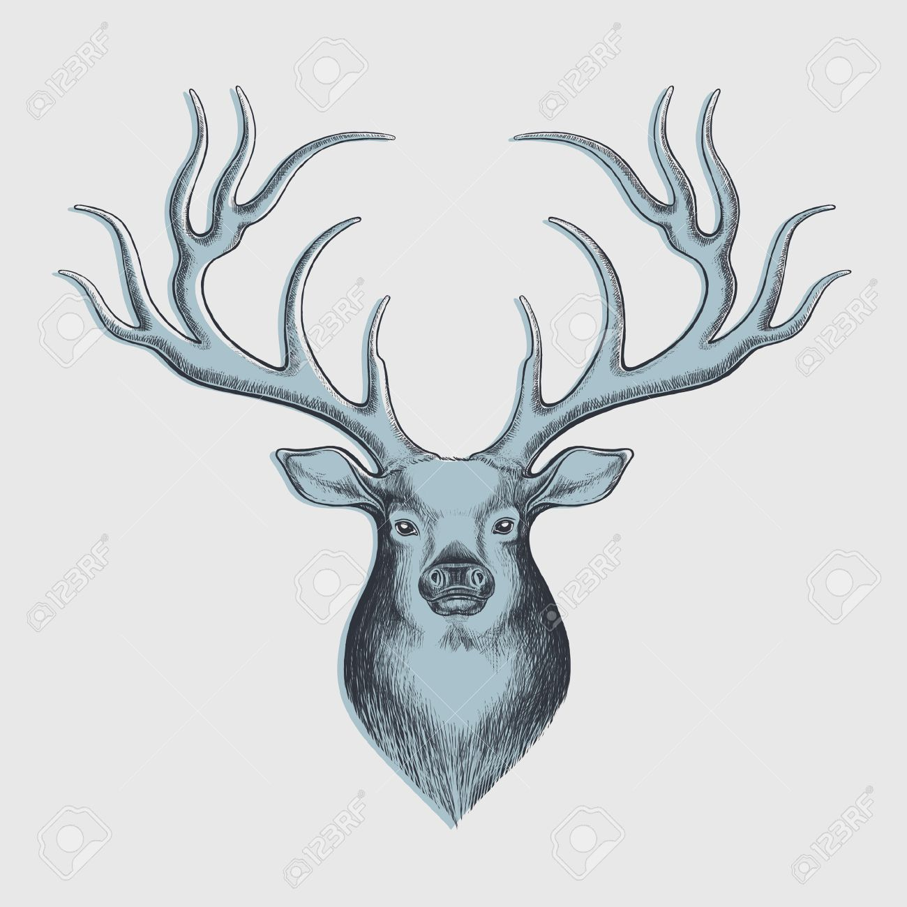1300x1300 Deer Drawing