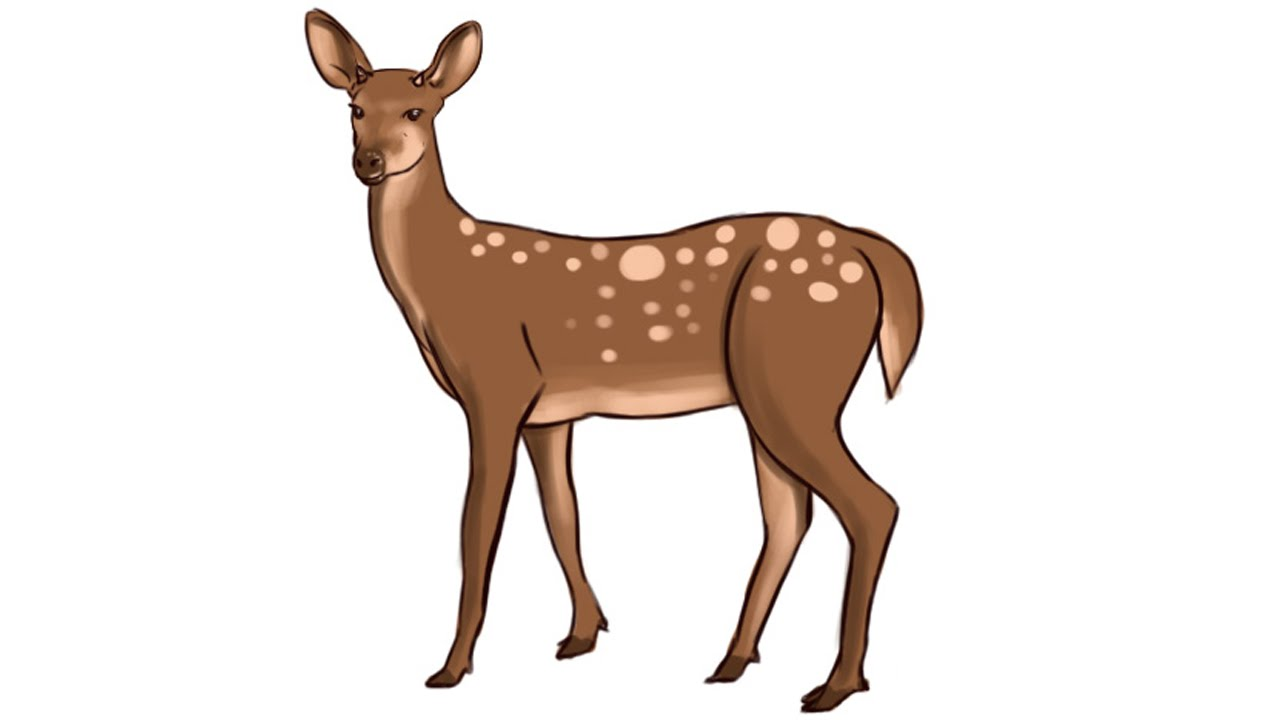 1280x720 How To Draw A Deer Step By Step For Kids