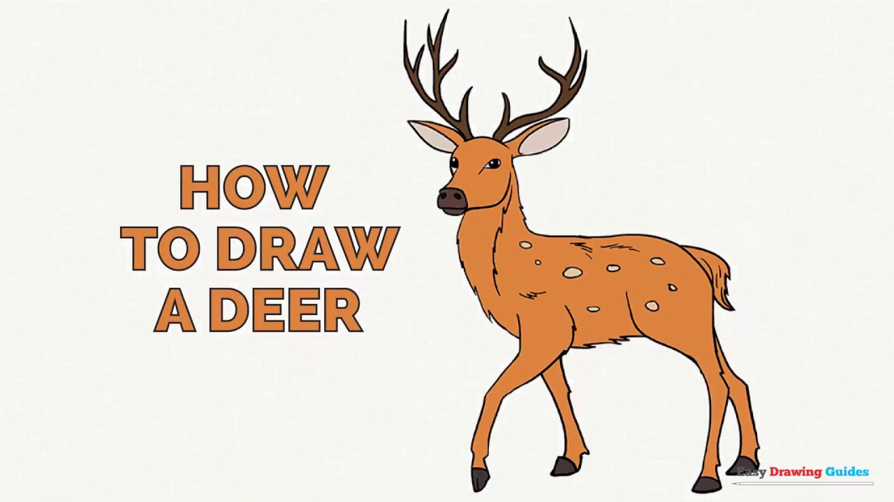 1280x720 How To Draw A Deer In A Few Easy Steps Drawing Tutorial For Kids