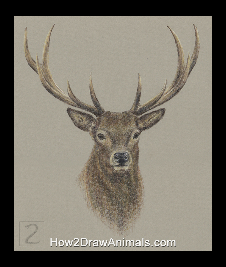 720x851 Special Deer Portrait Drawing