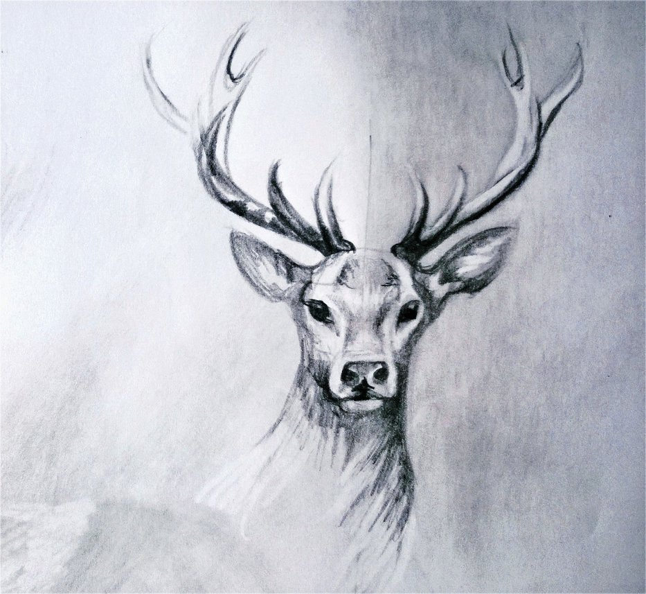933x857 Deer Drawing 2 By Lineke Lijn
