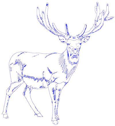 400x439 Deer Drawing, Step 5 Art Drawing Step, Drawings