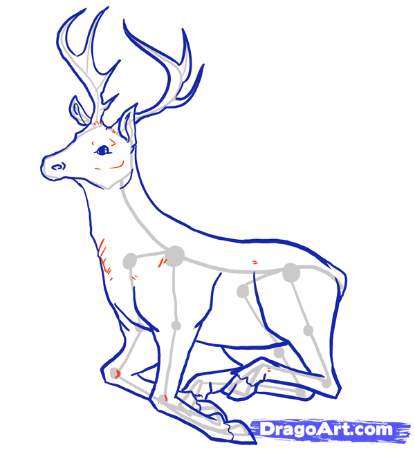 600x651 How To Draw Deer, Drawing Deer, Step By Step, Forest Animals